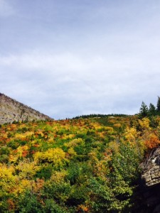 Beautiful fall colors along the Going-to-the-Sun Road.