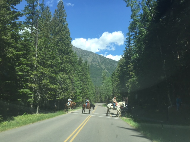 A group trail ride crosses the road in the park.
