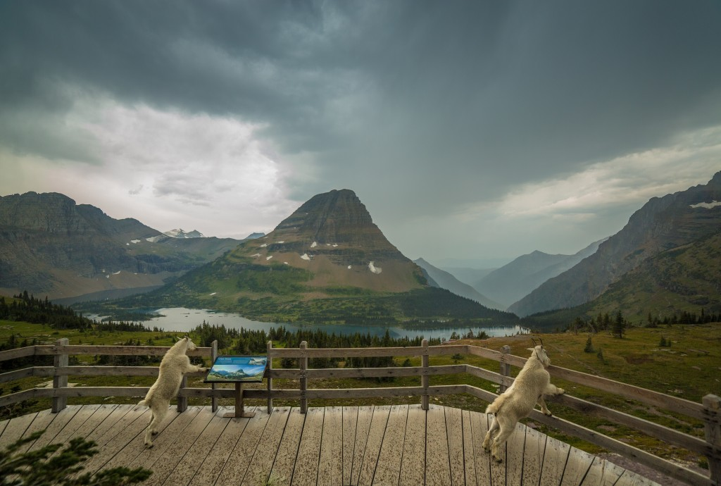 Hidden Lake Lookout in Glacier National Park (Photo credit: Nicholas Parker)