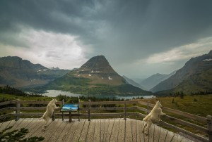Hidden Lake Lookout in Glacier National Park (Photo credit: Nicholas Parker)
