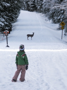 Winter Fun in Western Montana With Glacier Adventure Guides