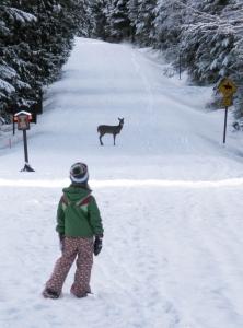 Winter Fun in Western Montana With Glacier Adventure Guides