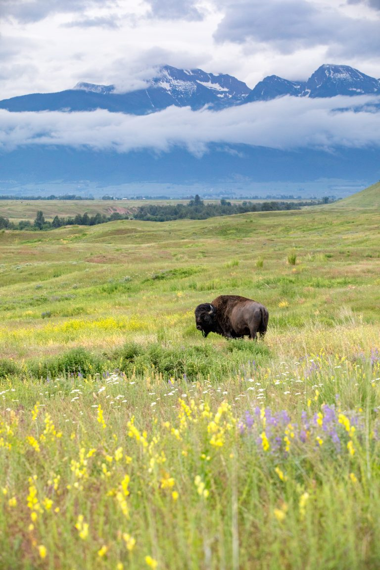 How Western Montana is Social Distancing Safely Outdoors